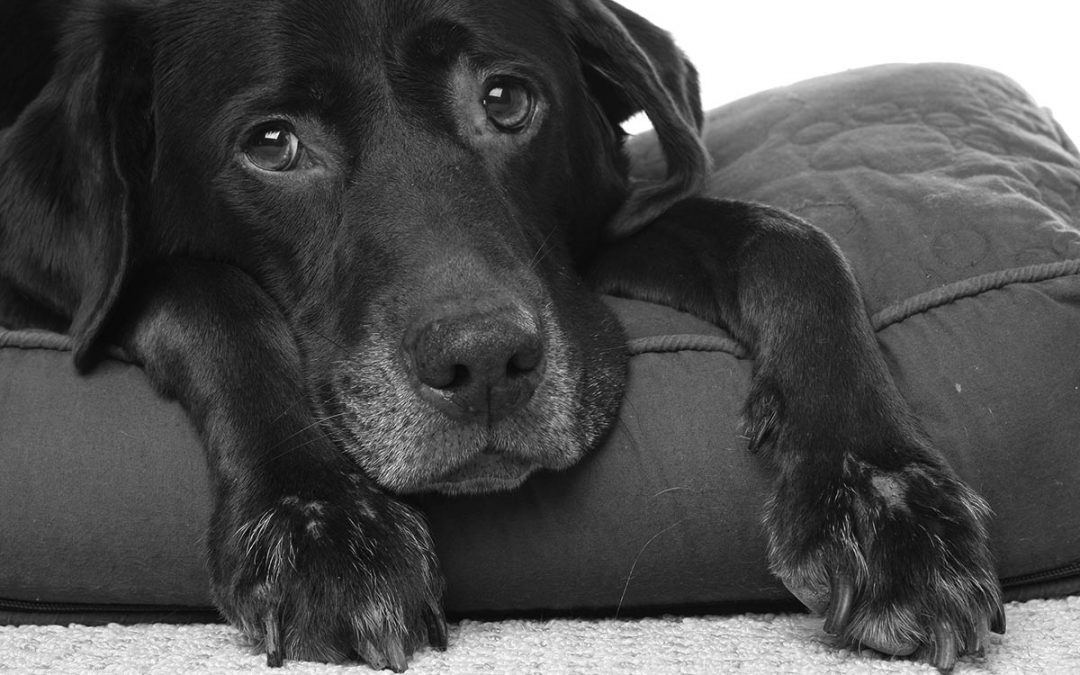 Signs Your Dog Has Cancer