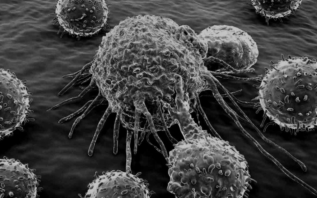 T Cell Therapy for Lymphoma in Dogs