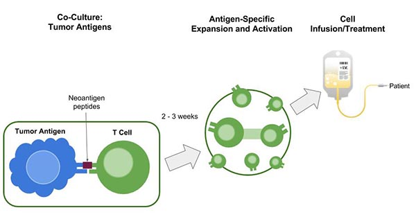 process of t cell therapy in treating lymphoma in dogs